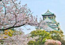Sakury v Japonsku